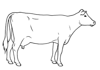 bcs3 body diagram of cattle on wiring diagram