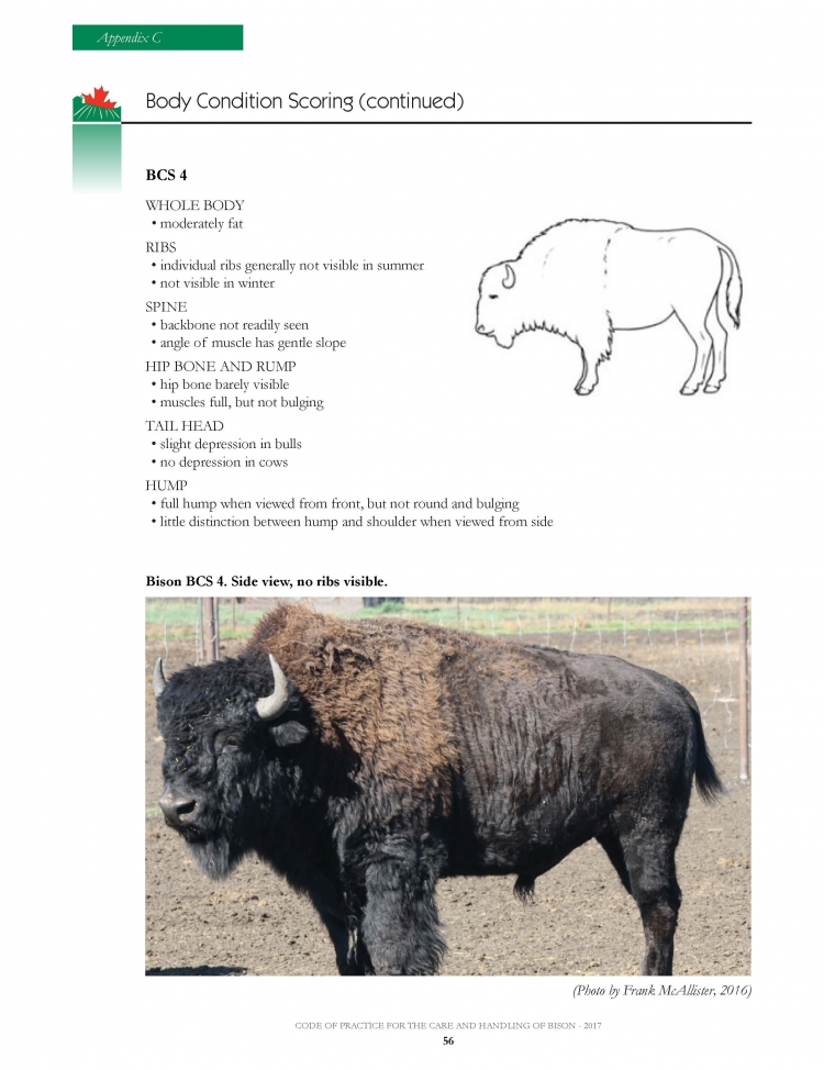 National Farm Animal Care Council - Bison Code of Practice