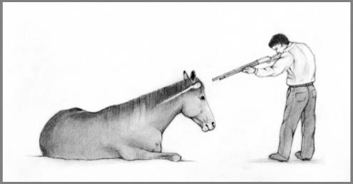 Conseil National Pour Les Soins Aux Animaux D 201 Levage